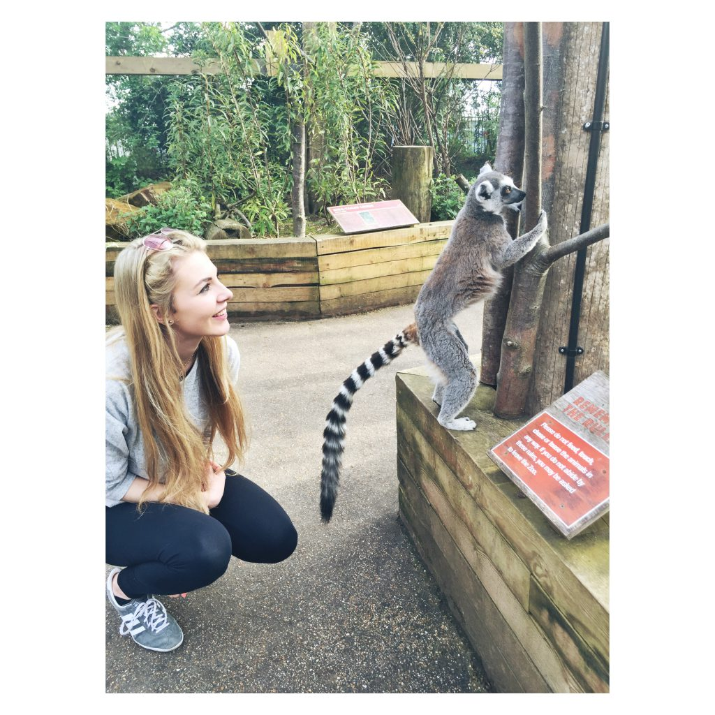 ZSL London Zoo Lemur Selfie 1