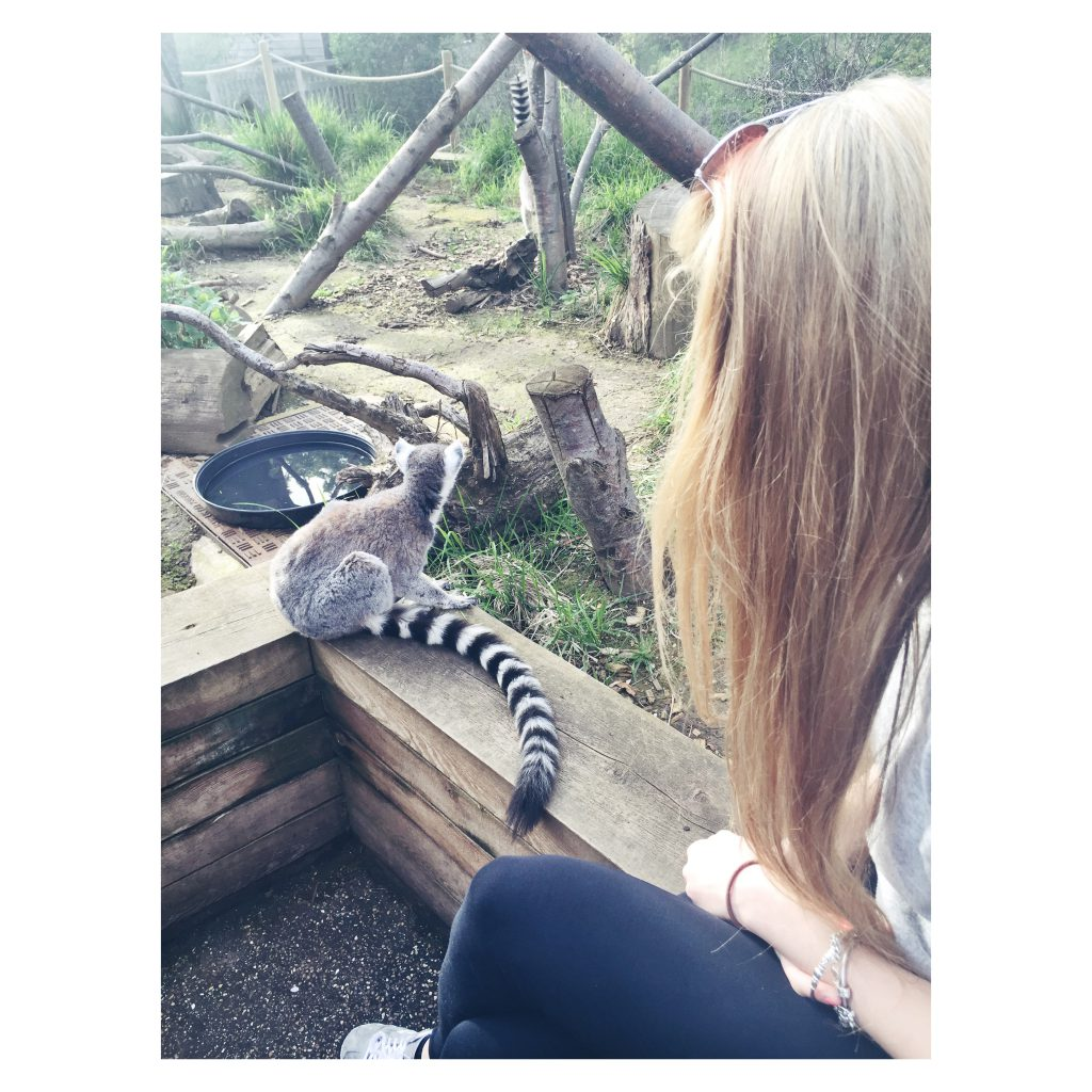 ZSL London Zoo Lemur Seflie